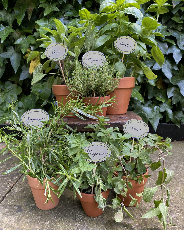 DIY Herb Pot Family